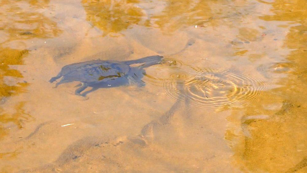 DORING_turtle